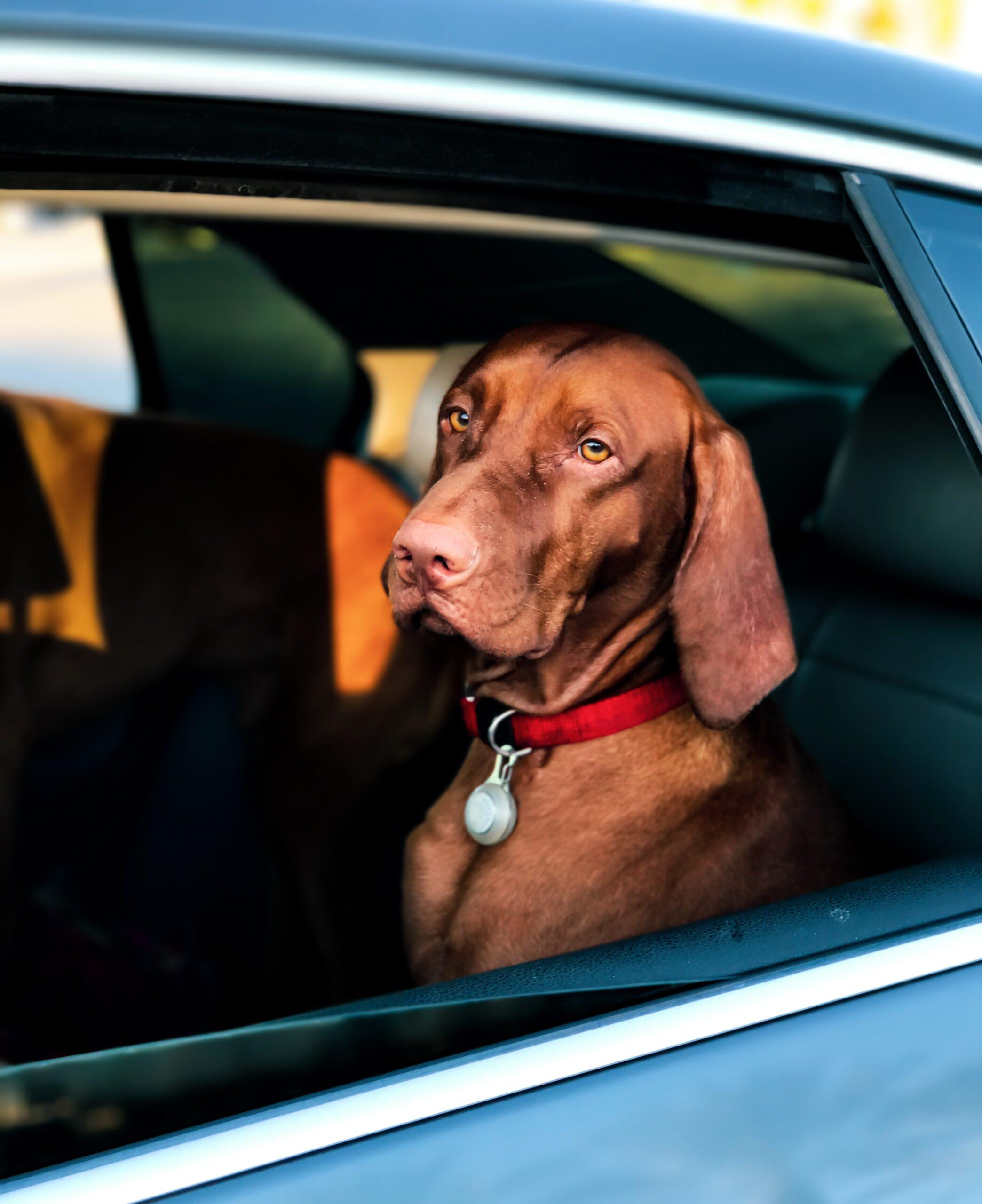 Как защитить автомобиль от угона и ограбления?